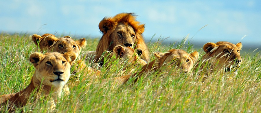 Image result for photos of african wildlife