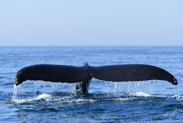 ape-town-day-tour-hermanus-whale-watching-whale-coast