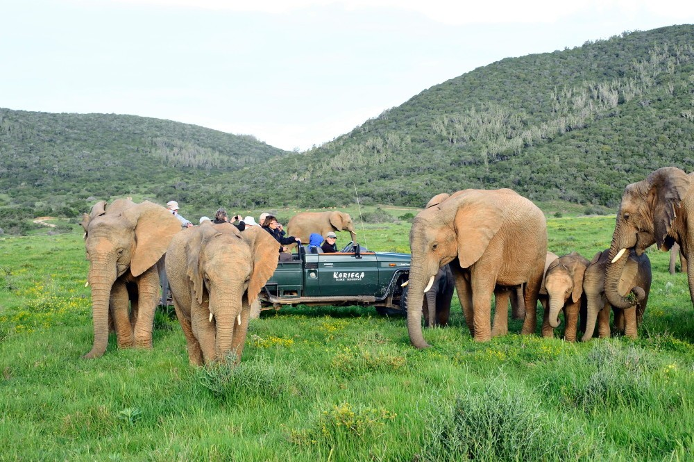 The Garden Route & Eastern Cape provides the opportunity for a malaria-free safari at Kariega game reserve