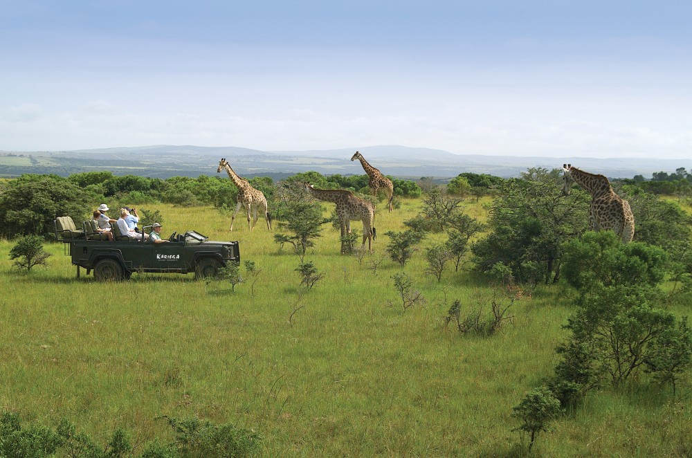 Our Garden Route Tours combined with the malaria-free Eastern Cape Safari Tour includes the choice of visiting Kariega private game reserve with free-roaming animals including the Big 5 of Africa, as well as other wildlife including Giraffe. Add on to your Cape Town Tours. One of the best activiities and tours you can do from Cape Town
