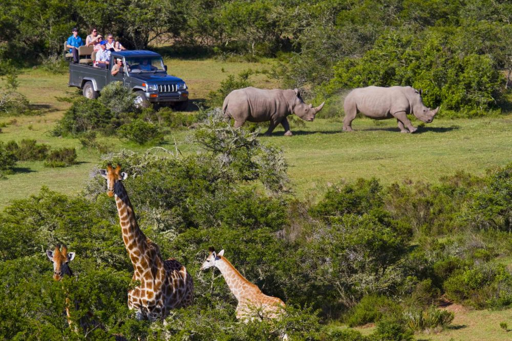 The Garden Route Game Reserve is the main destination on our Cape Town Safari overnight tour
